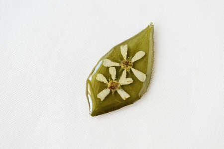 Green leaf with white flowers filled with epoxy resin on a white textile background, top view. The basis for a pendant or earrings. Handmade jewelry in the manufacturing process Stockfoto