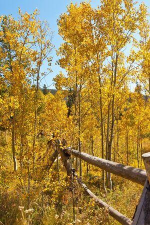 Broken fence and golden aspen trees in Colorado Stock Photo
