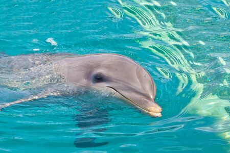 closer: Dolphin swims closer to wink and smile