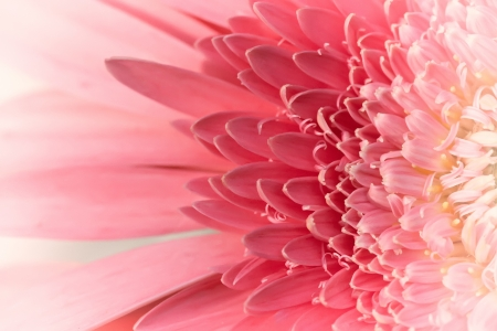 Abstract effect on a soft pink Gerber Daisy photo
