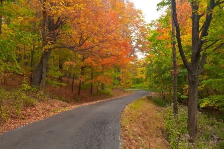Country road surrounded by the colors of autumn Imagens