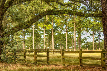 tallahassee: Wooden fence, meadows and tall oak and pine trees in Tallahassee, Florida Stock Photo