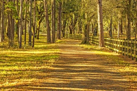 Pathway dans la campagne avec de grands arbres de chêne et de clôture en bois à Tallahassee, en Floride Banque d'images - 27742743