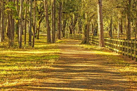 Pathway into the countryside with large oak trees and wooden fence in Tallahassee, Florida