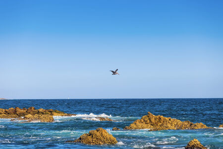 Brown pelican flying over the Sea of Cortez in Cabo San Lucas, Mexico Stock Photo - 32544040