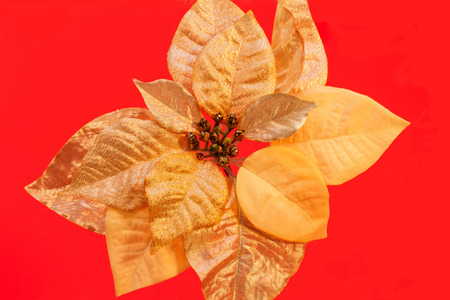 silt: Gold colored silt poinsettia flower on red background