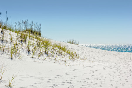 destin: Sand dune on Miramar Beach in Destin, Florida on the Gulf of Mexico