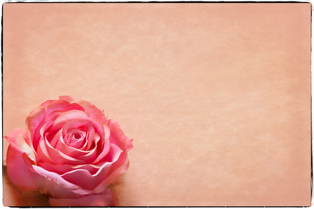 text pink: Valentines Day Greeting card with room for text, pink rose, and soft border. Great for Valentines Day, Mothers Day and Easter. Stock Photo