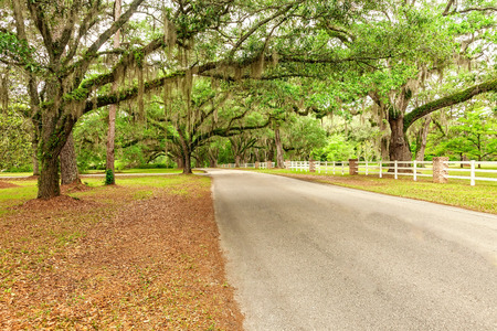 Large oak trees canopy over a country road in Tallahassee, Florida
