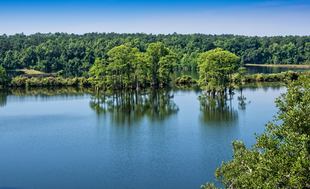 tallahassee: Scenic view of Piney Z lake in Tallahassee, Florida
