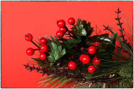 room for your text: Holly and Evergreen card with border, red background and room for your text