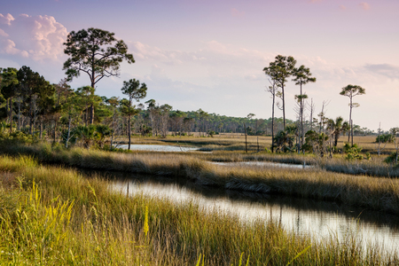 gulf of mexico: Swampy landscape in St. Marks National Wildlife Refuge in St. Marks, Florida Stock Photo