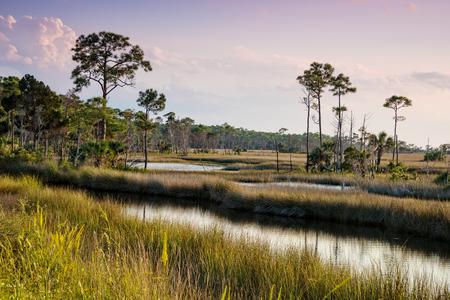 swampy: Swampy landscape in St. Marks National Wildlife Refuge in St. Marks, Florida Stock Photo