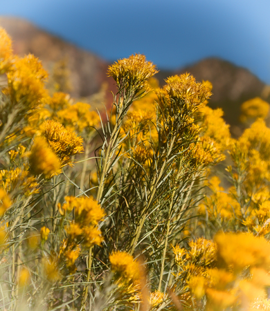 yellow wildflowers: Yellow wildflowers in the mountains of Colorado Stock Photo