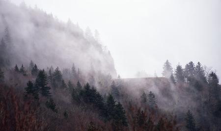 north ridge: Fog rolls in at a peak on the Blue Ridge Parkway in North Carolina