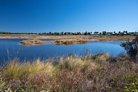 세인트 마크 국립 야생 동물 보호소에서 습지의 아름다운 풍경