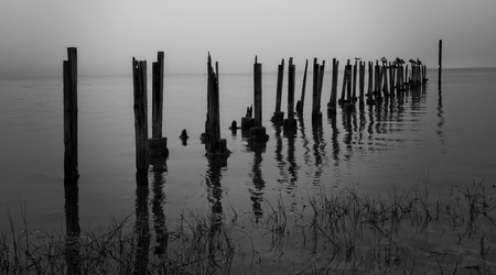 gulf of mexico: Old posts extend out to the Gulf of Mexico with various water birds resting, in Black & White.