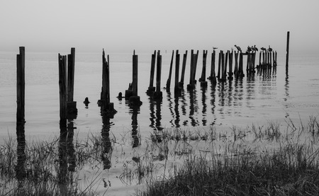 shore: Old dock posts and water birds in a black and white tone.