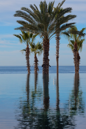 los cabos: Infinity pool, falling off into palm trees and Mexican beach Stock Photo