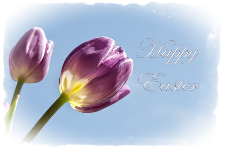easter flowers: Happy Easter Greeting card with colorful tulip flowers, border, and Happy Easter Text