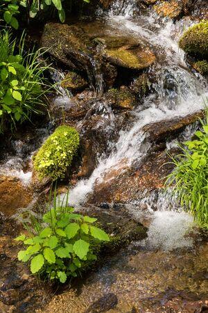 smoky mountains: Small Running creek in the Smoky Mountains, North Carolina