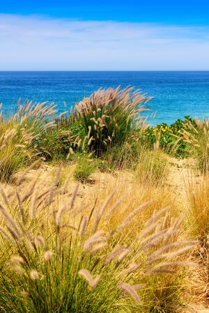 Sand, sea oats along the Sea of Cortez