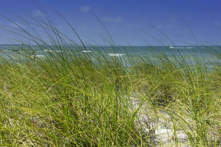 Sandy beach with sea grass on the Gulf of Mexico