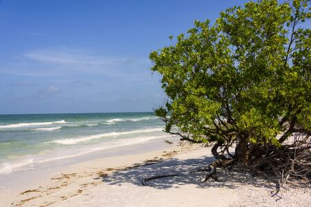 Sunny beach in Florida with healthy natural tree Imagens