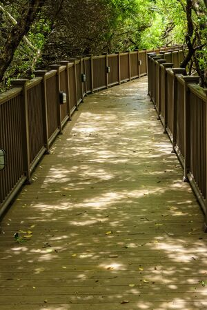 Wooden boardwalk with handrails through lush tropical vegeation.