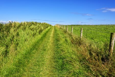 A walking path through a green meadow at Giants Causeway in Northern Ireland