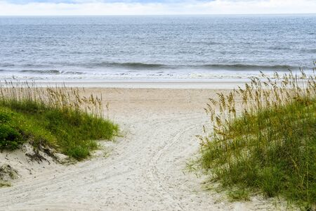 Beach and natural sea oats on the beach in Amelia Island, Florida Imagens