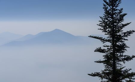 Silouette of a Spruce tree with the misty Blue Ridge Mountains in the background.