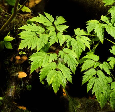 Beautiful green fern plant with natural mushrooms growing in the mountains of North Carolina