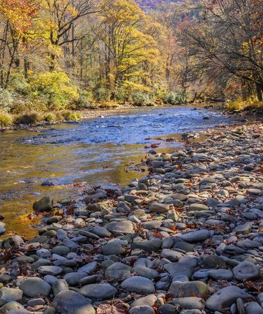 Small brook running through the mountains in the Fall in North Carolina Imagens