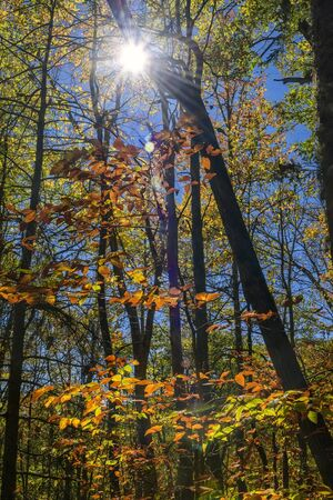 Sun rays beaming throught the autumn colores forest in North Carolina