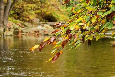 Colorful tree branch against a stream in the North Carolina mountains.