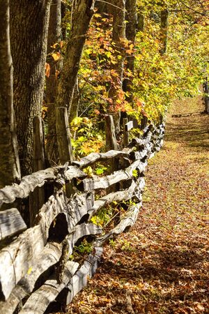 Leaf covered walking path in the colorful season of Fall.