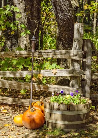 Colorful Autumn display with pumpkins and pansies.