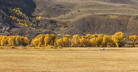Horse grazing in pasture in field in the Fall