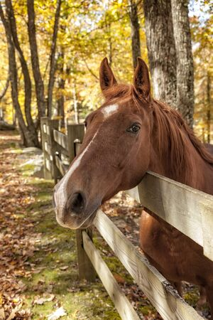 Greetings from a horse in a rural pasture in the season of Fall. Stockfoto