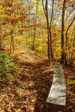 Hiking path and wooden bench in the mountains of North Carolina in the season of Fall. Imagens
