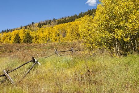 Colorado countryside with wooden fence and golden aspen colors