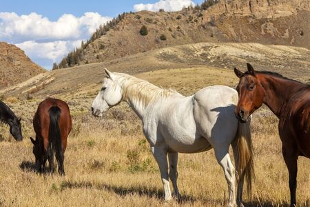 Group of horses grazing in a remote valley of Colorado Imagens