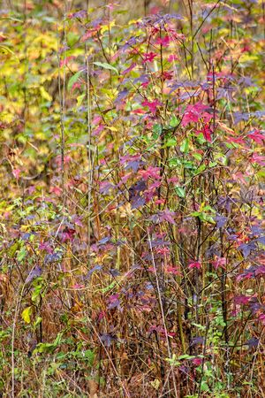 Colorful display of weeds and leaves in the season of Autumn in Tallahassee, Florida
