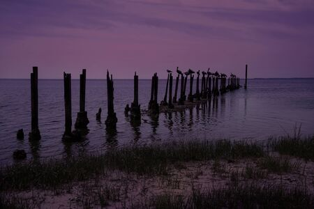 Pelicans resting on poles on the St. Marks River in northern Florida.