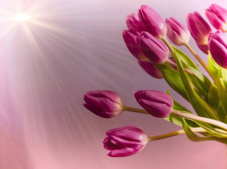 Bouquet of pink tulips with a ray of sunlight 版權商用圖片