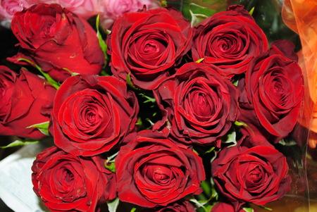 rosas rojas: Bouquet de hermosas rosas rojas sobre fondo negro