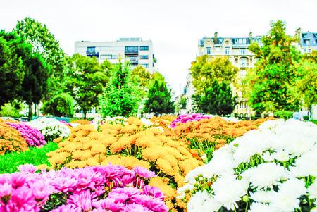 Parisian garden with flowers in the city Paris photo