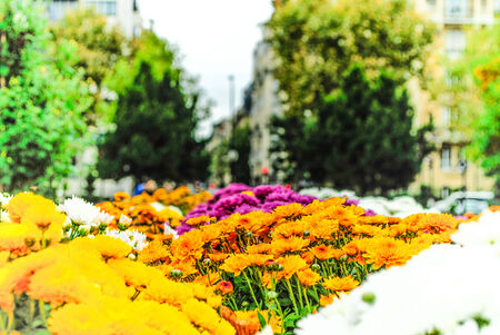 Parisian garden with flowers in the city Paris photo