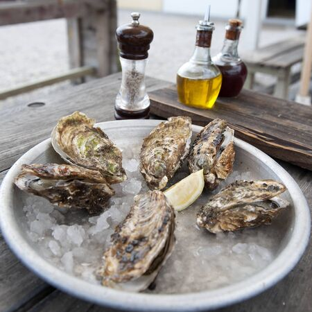 Oysters on the beach